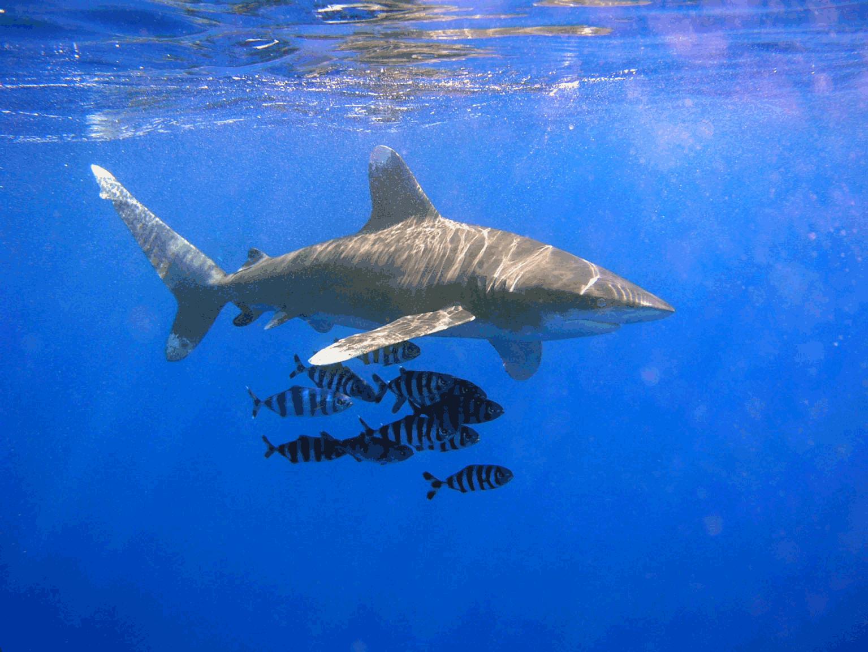 how to find shark teeth on the beach