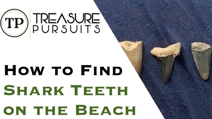 How to Find Shark Teeth on the Beach